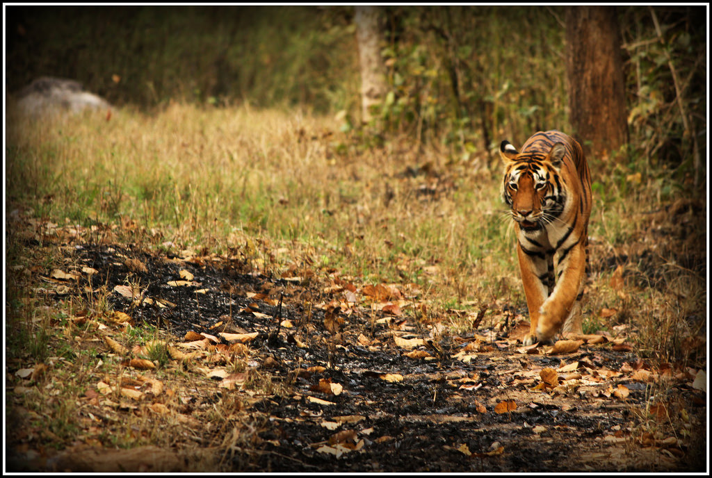 Kanha National Park photo
