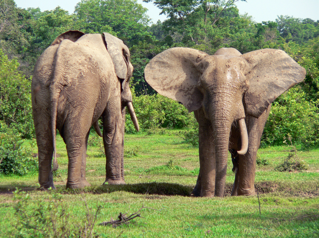 Ghana Safari Mole, one of the best places to visit in Ghana